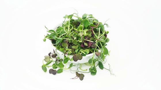 microgreen health benefits cancer, diabeties, nutrition