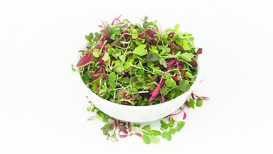 microgreens health benefits covid 19 sars covid-19