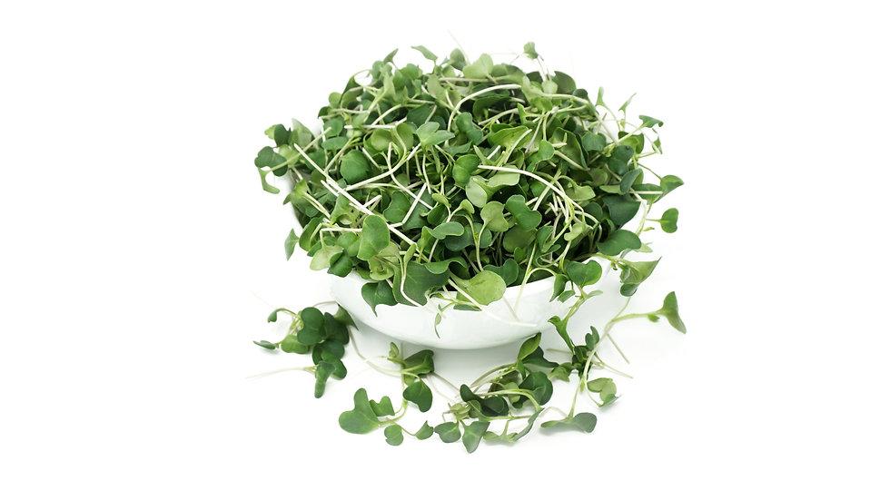 Broccoli Microgreens Nutritional Analysis Nutrients, Minerals, Vitamins, Antioxidants, Sulforaphane