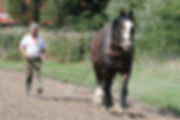 Heavy Horse Farming.jpg