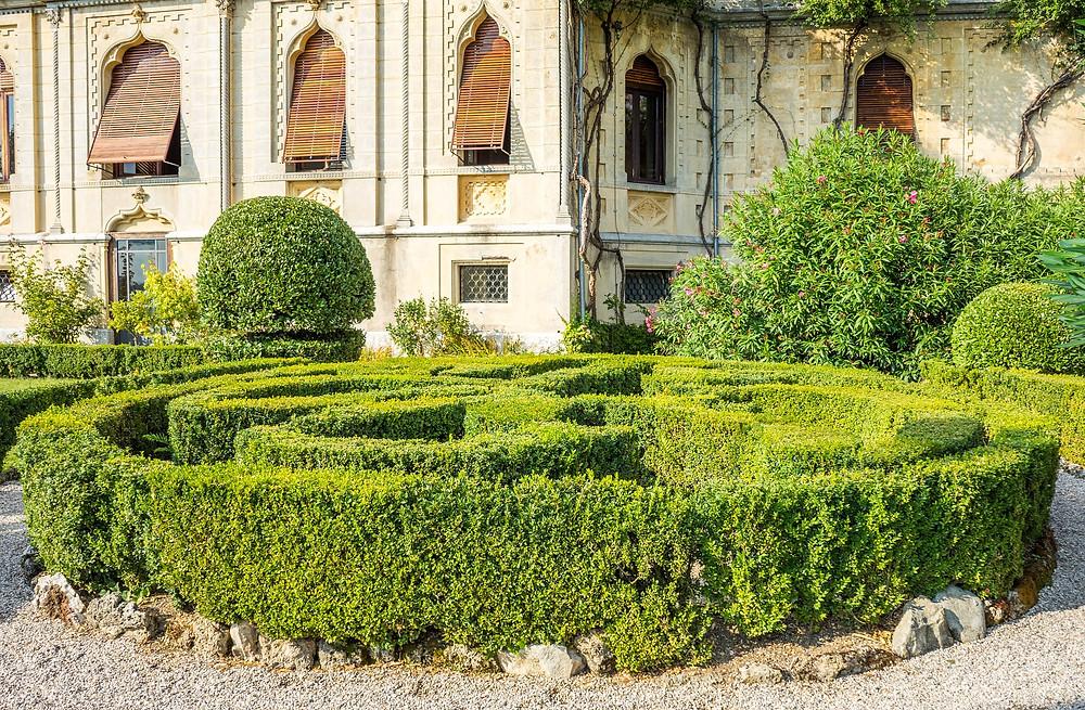 shrub maze, green garden