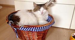 Zen Pet Otel Kedi Katı