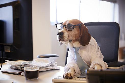 Beagle-Dressed-as-Businessman-Watching-C