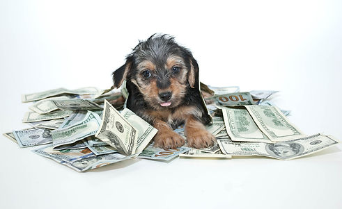 Puppy-with-Money.-DogSmith-Rewards-and-P