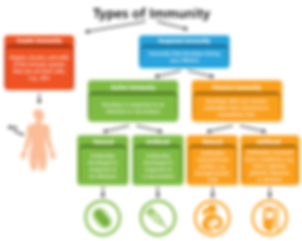 immunity 3.png