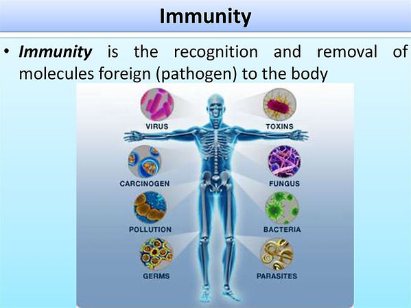 immunity 4.jpg