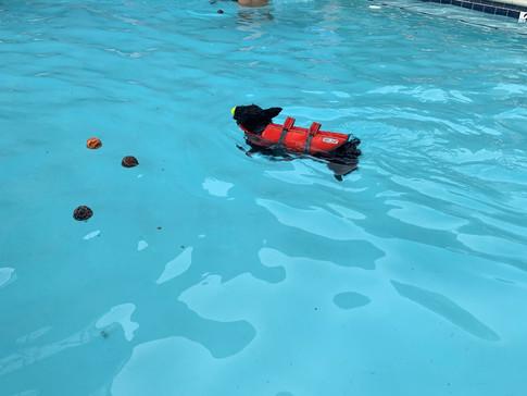 Scotty Swimming.JPG
