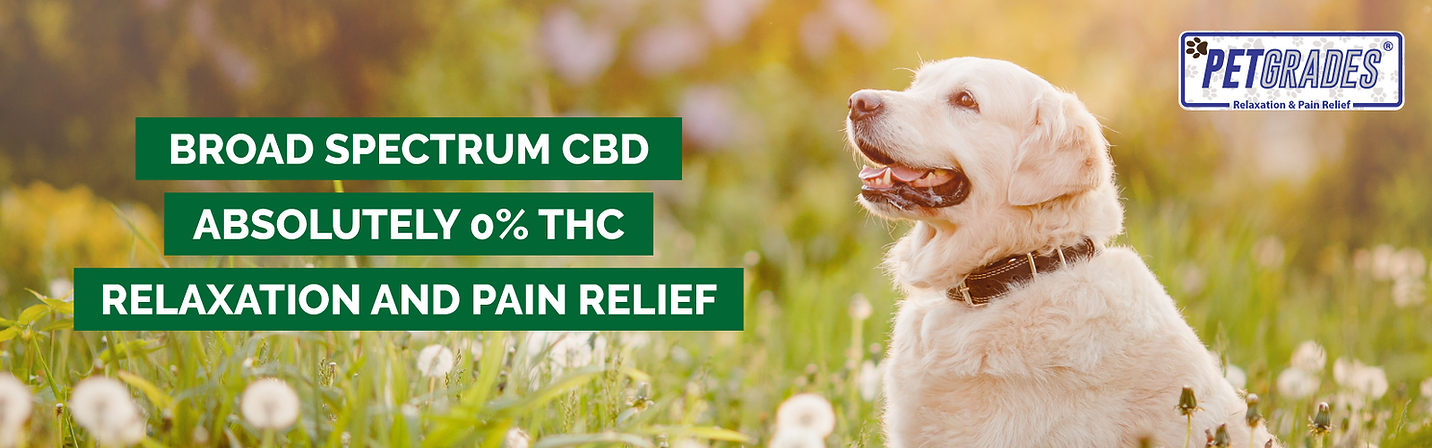 Best Pet CBD