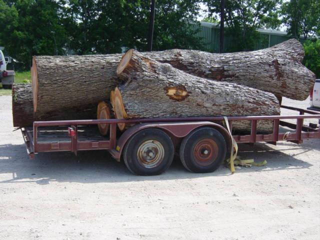 Mesquite Logs8882.JPG