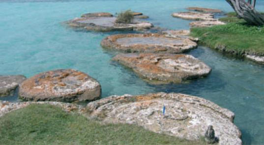 Estromatolitos con cabezas de 3 m de diametro