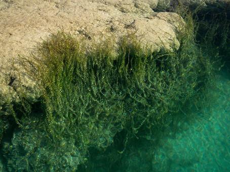 Porque la laguna de Bacalar estaría perdiendo sus siete colores?