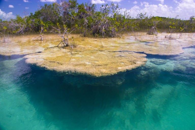 La relación entre manglar, estromatolitos y caracol chivita