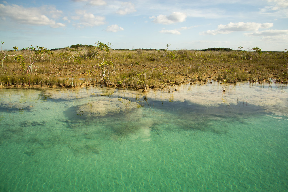 Stromatolites - Estromatolitos laguna de Bacalar