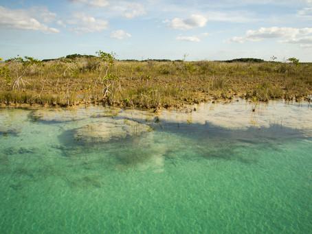 ¿Fósiles vivientes en la laguna de Bacalar?