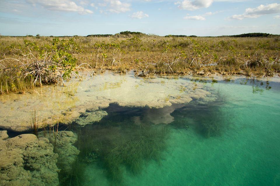 Formación de estromatolitos Laguna de Bacalar