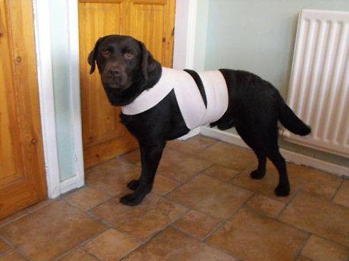 Førstehjælp på hunde 1.jpg