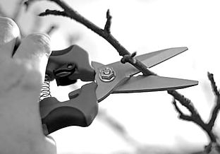 pruning-shears-hand-260nw-347242469_edit