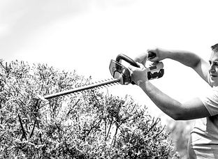 gardener-trimming-trees-with-hedge-trimm