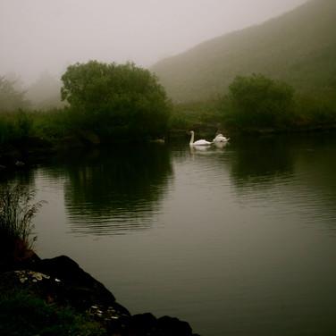 Edinburgh - Swan Lake