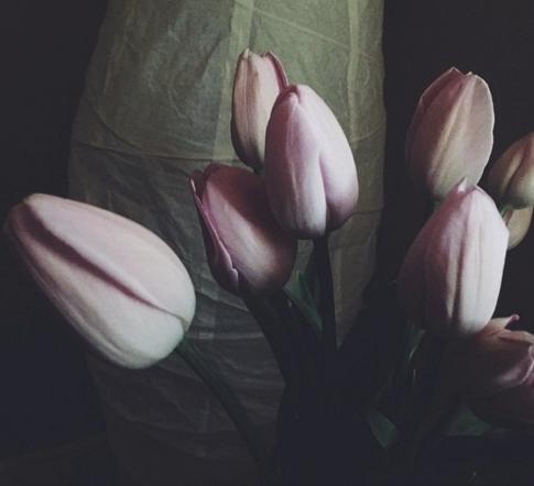 Tulip O'Keefe