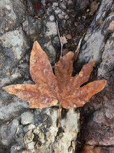 Leaf in Eaton Canyon