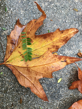Nested Leaves