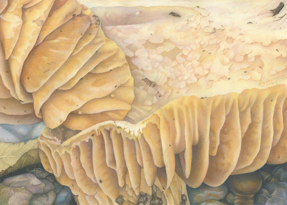 Mushroom Understory