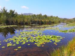 un étang au milieu du désert
