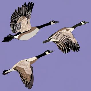 Digital - Birds (7)