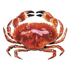 Digital - Crab