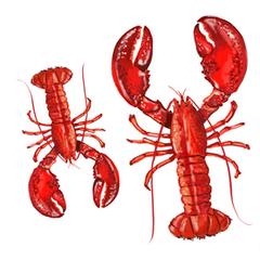 Digital - Lobster
