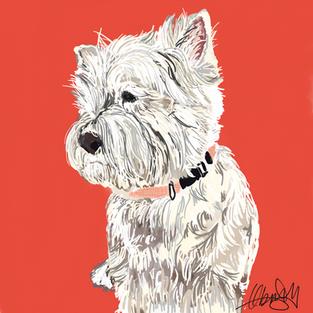 Westie - Dog Portrait