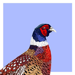 PHEASANT - LIGHT BLUE.jpg