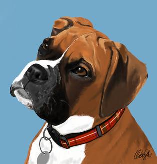 Boxer - Dog Portrait