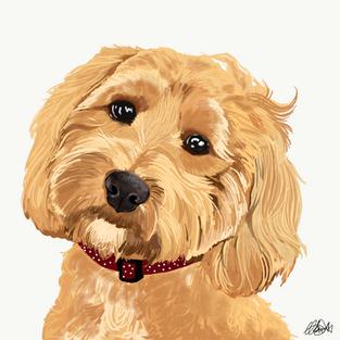 Cockerpoo - Dog Portrait