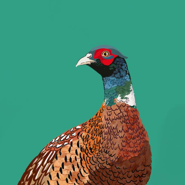 Digital - Pheasant