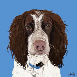 Spaniel - Dog Portrait