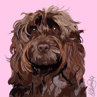Cockapoo - Dog Portrait