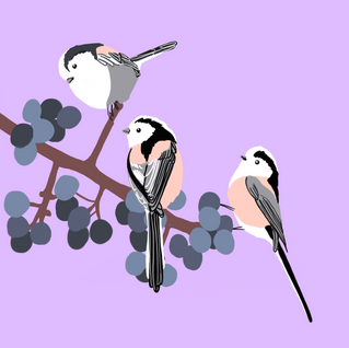 Digital - Birds (6)