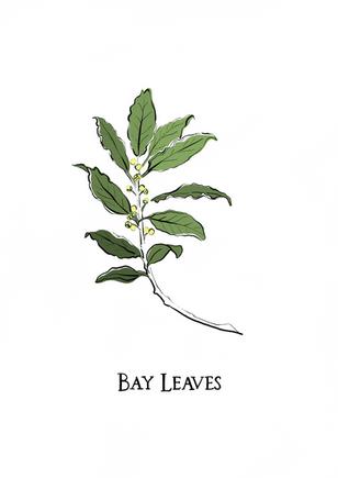 Botanical Illustrations - Peebles Hydro