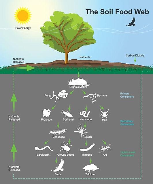 Soil-Food-Web-Diagram.jpg