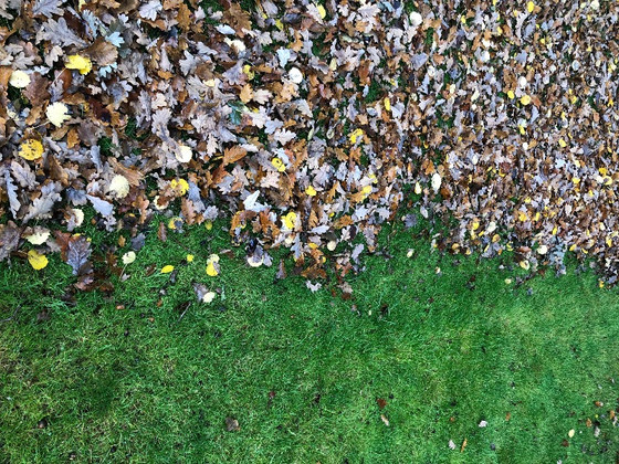Lawn Tiger - Autumn Lawn Care Tips