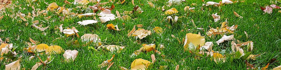 Leaves on a lawn in Autumn
