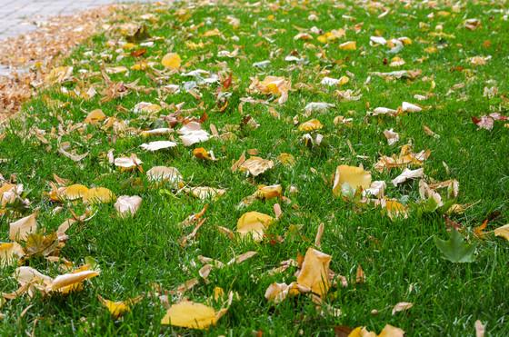 Autumn Lawn Repairs
