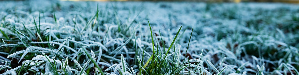 Grass wth Winter frost on it
