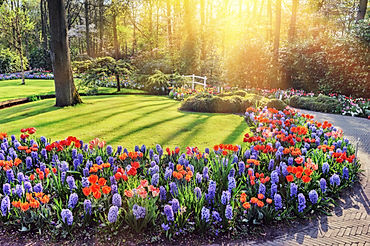 A lawn with Spring flowering bulbs