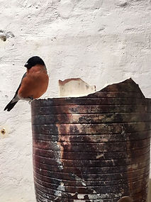 A special visitor in my studio : a bird on old pottery