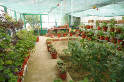 Special needs greenhouse