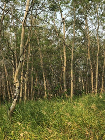 Mature forest growth_SM.jpg