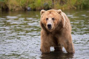 brown-bear-in-body-of-water-during-dayti
